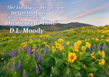 spring-meadows-mike-dawson